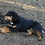 Lisa - Arca dei Cani
