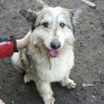 Percy - Arca dei Cani