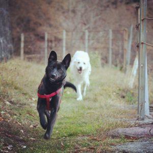 Duma e Duke - Arca dei Cani