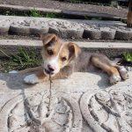 Lukas - Arca dei Cani