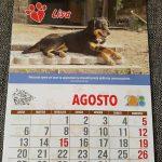 Arca dei Cani - Calendario