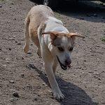 Ophelia - Arca dei Cani