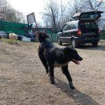 Bonnie - Arca dei Cani