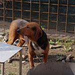 Peanut - Arca dei Cani