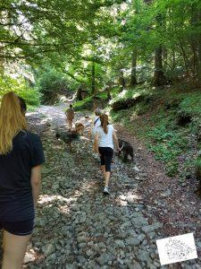 Passeggiata con gli Gnomi - Arca dei Cani