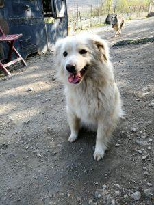 Ercolino - Arca dei Cani