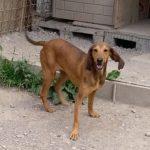 Kelly - Arca dei Cani