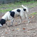 Prince - Arca dei Cani