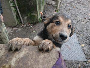 Nanouk - Arca dei Cani