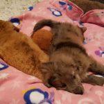 Danny & Lucy - Arca dei Cani
