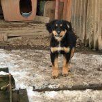 Oyuun - Arca dei Cani