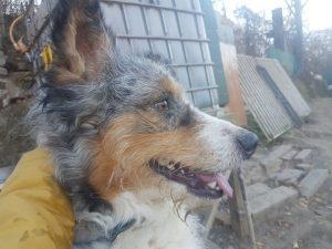 Cisko - Arca dei Cani