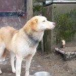 Sansa - Arca dei Cani