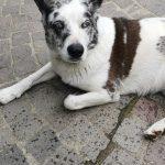 Nina - Arca dei Cani