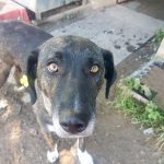 Zika - Arca dei Cani